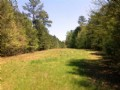 Timber Investment And Hunting Retre