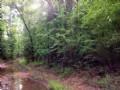 Recreational Timberland