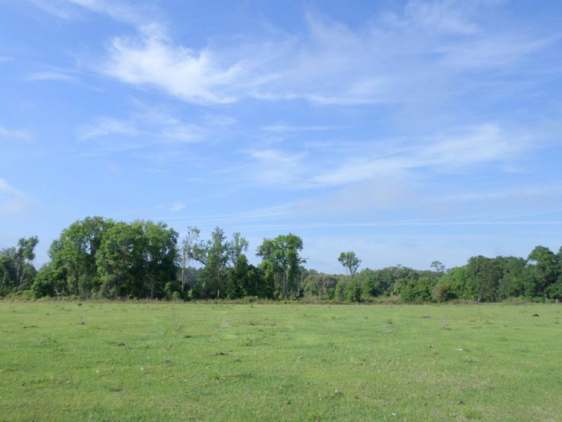 120± Acres For Only $2,626/ac : Fort Mc Coy : Marion County : Florida