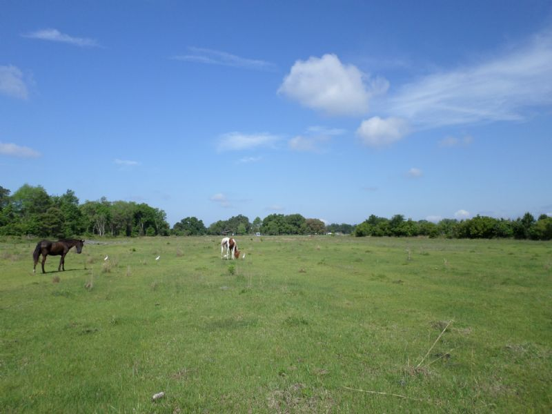 53± Ac - Only $2,200/ac : Fort Mc Coy : Marion County : Florida