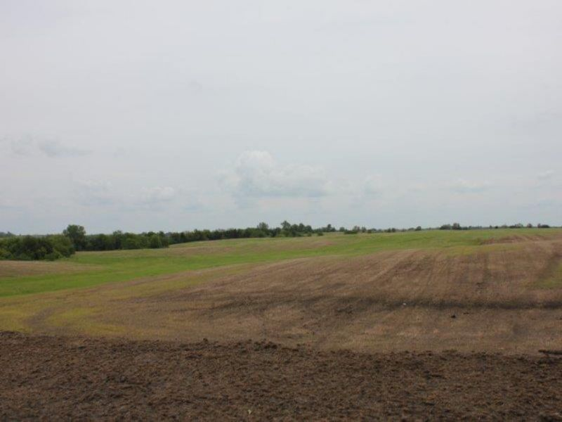 Online Only Land Auction : Mount Ayr : Ringgold County : Iowa