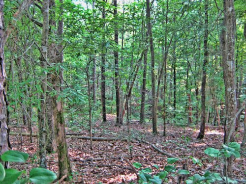 Quiet Country Recreational Property : Chester : South Carolina