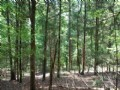 Recreational Tract In Sumter Forest