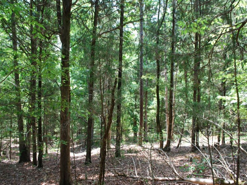 Recreational Tract In Sumter Forest : Whitmire : Laurens County : South Carolina