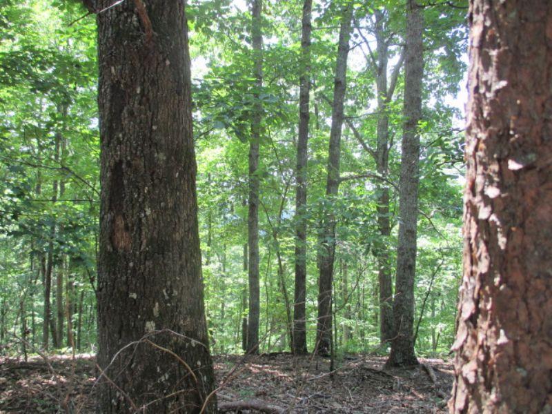 8.52 Wooded, Private Acres : Ranger : Gordon County : Georgia