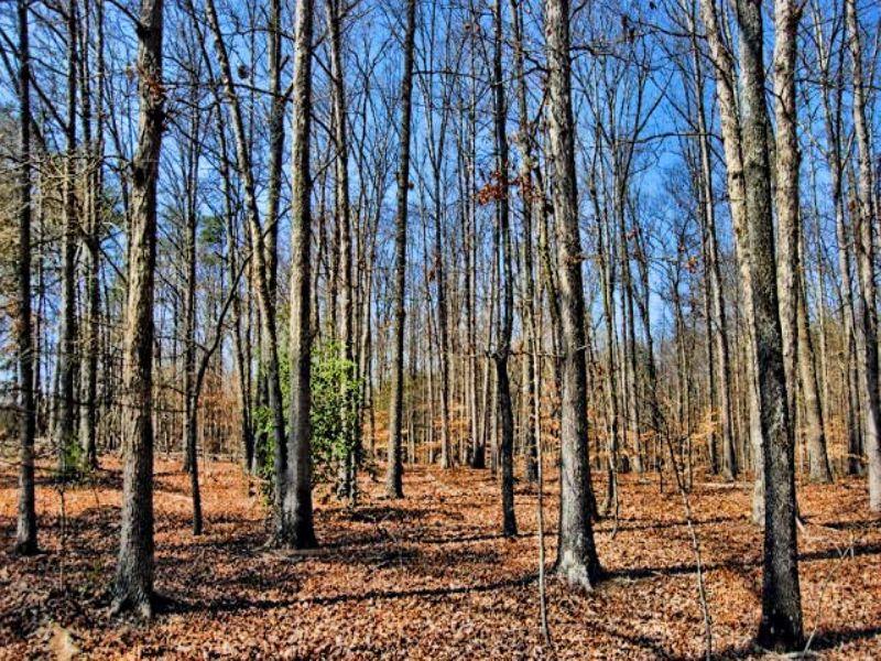 43 Acre Farm : Honea Path : Greenville County : South Carolina