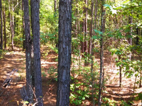 Timbered 5 Acres, $495 Down : White Plains : Greene County : Georgia