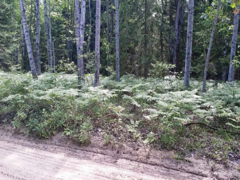 5 Acres Near Decheau Lake : Atlanta : Montmorency County : Michigan