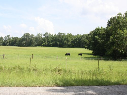 67 Acres : St. Francisville : West Feliciana Parish : Louisiana