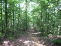 467 Acres Wooded
