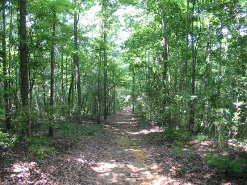 467 Acres Wooded : Cusseta : Chattahoochee County : Georgia