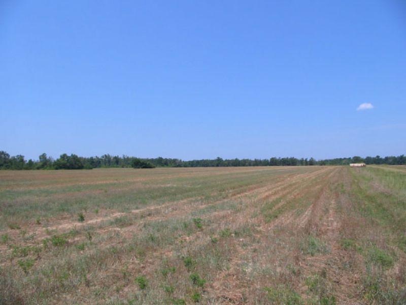 125.21 Acres Open & Wooded : Davisboro : Washington County : Georgia