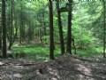 Hemlock Ridge – Timber Investment