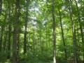 Ellenburg Forest