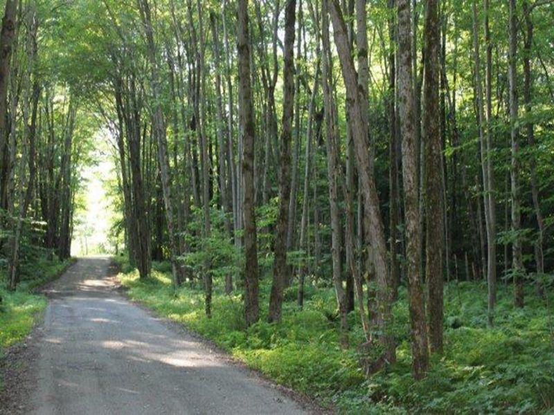19 Acres Woods Build Your Home : Western : Oneida County : New York