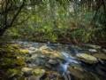 Mt Creeks On 300+ Acres