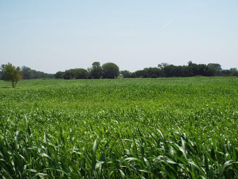 160± Acres : Dacoma : Woods County : Oklahoma