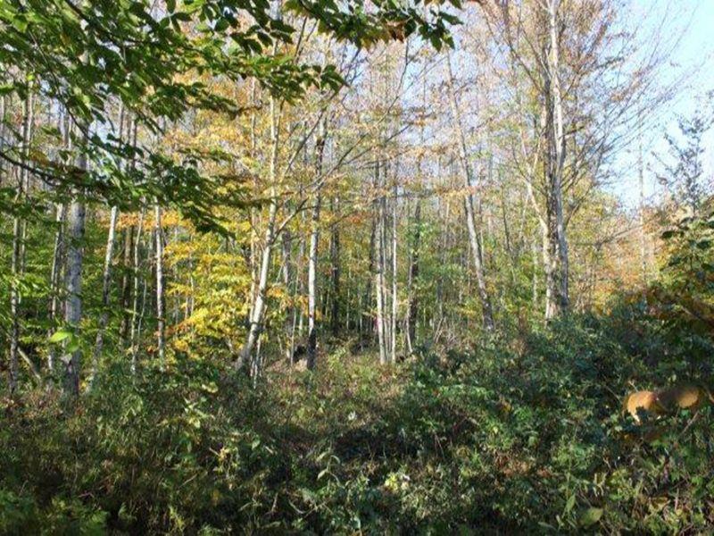 Land In Annsville Near State Land : Annsville : Oneida County : New York