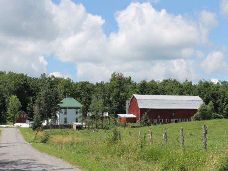 Certified Organic Dairy Farm : Hammond : Saint Lawrence County : New York