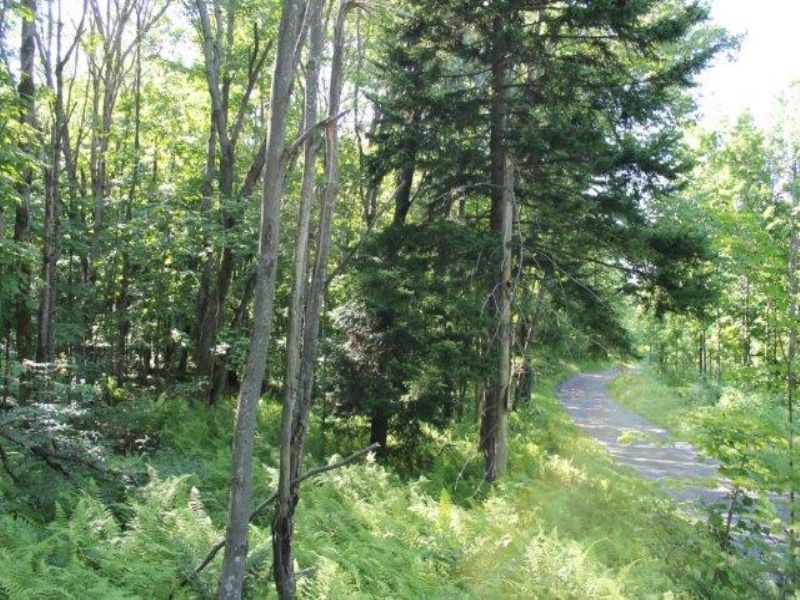 25 Acres Hunting Land Tug Hill : Martinsburg : Lewis County : New York