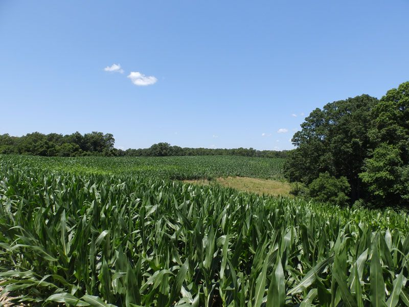 501 Ac., Huge Timber Hunting Farm : Pearl : Pike County : Illinois