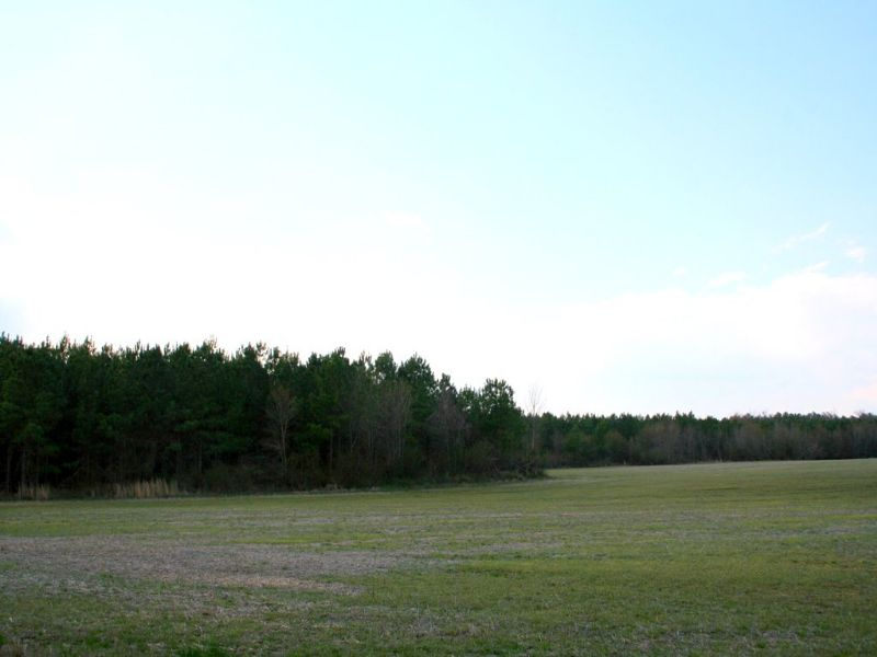 10.1 Acres W/ Previous Perk : King William : King William County : Virginia
