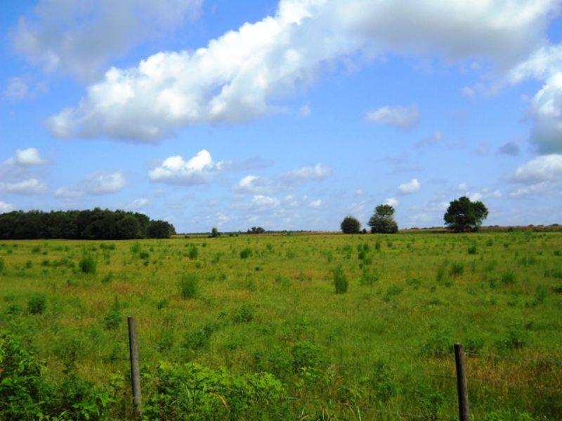 36 Acres Of Pasture : Live Oak : Suwannee County : Florida
