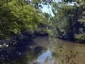 50+/- Acres On Sandy Creek : Dadeville : Tallapoosa County : Alabama