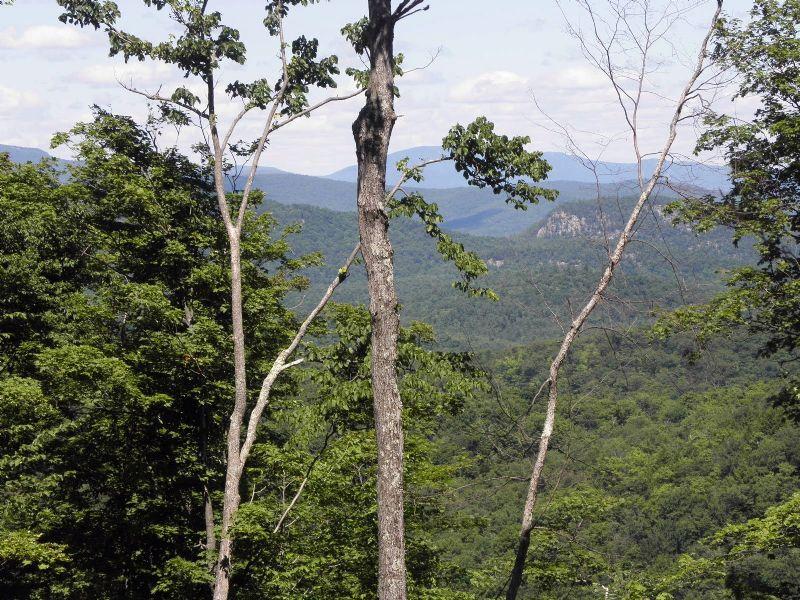 Patent Line Forest : Warrensburg : Warren County : New York