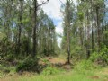 182 Acre Timber Investment
