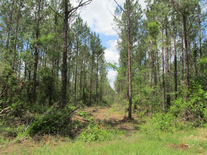 182 Acre Timber Investment : Burkeville : Newton County : Texas