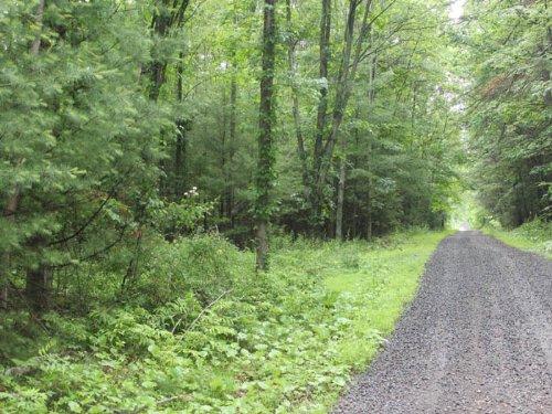 6 +/- Acres Of Land : Orangeville : Columbia County : Pennsylvania