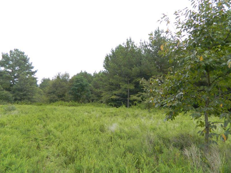 132 Acres Of Prime Hunting Land : Carlton : Oglethorpe County : Georgia