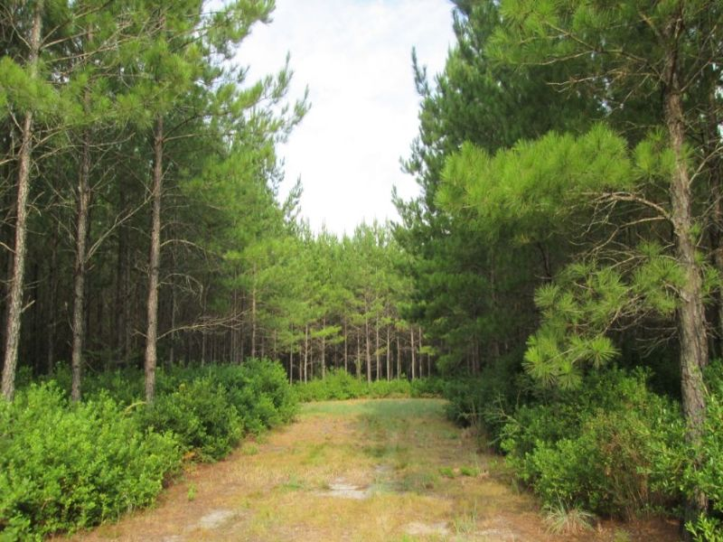 21 Acres Millwood Plantation : Manor : Ware County : Georgia
