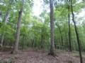 100 Acres Of Mature Hardwood