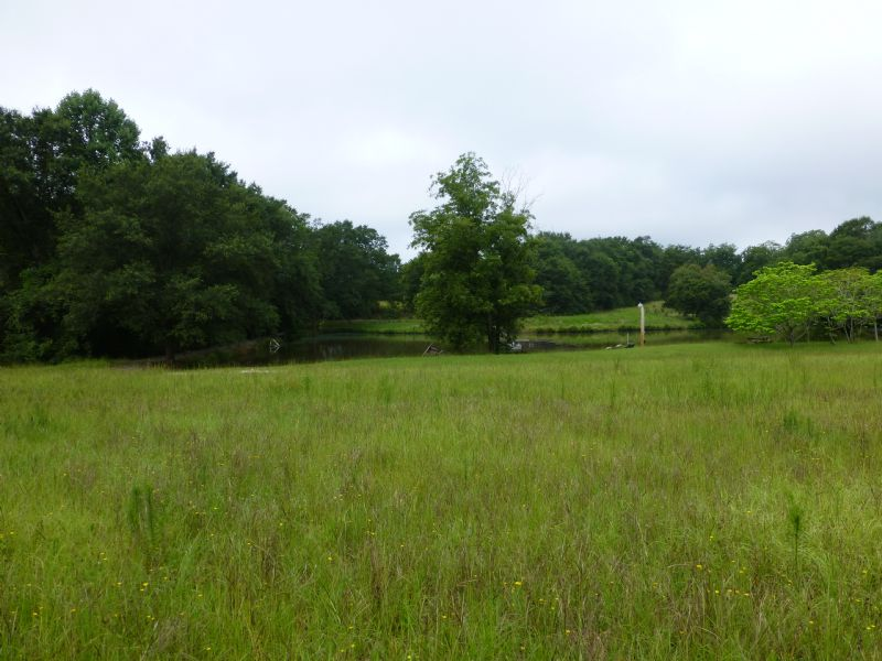 10 Acres For Sale : Roberta : Crawford County : Georgia