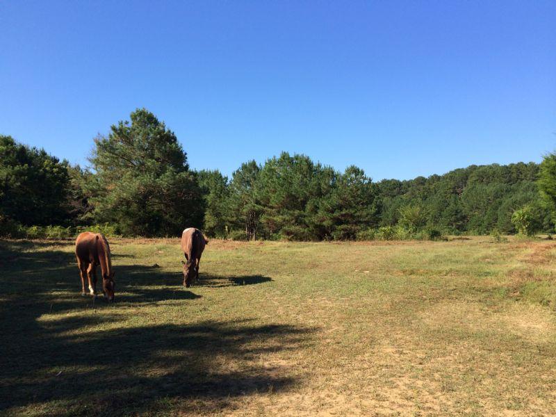 Affordable Farm, Polk County , Ga : Cedartown : Polk County : Georgia