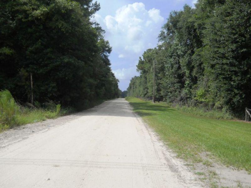 100 Acres Close To Suwannee River : Live Oak : Suwannee County : Florida