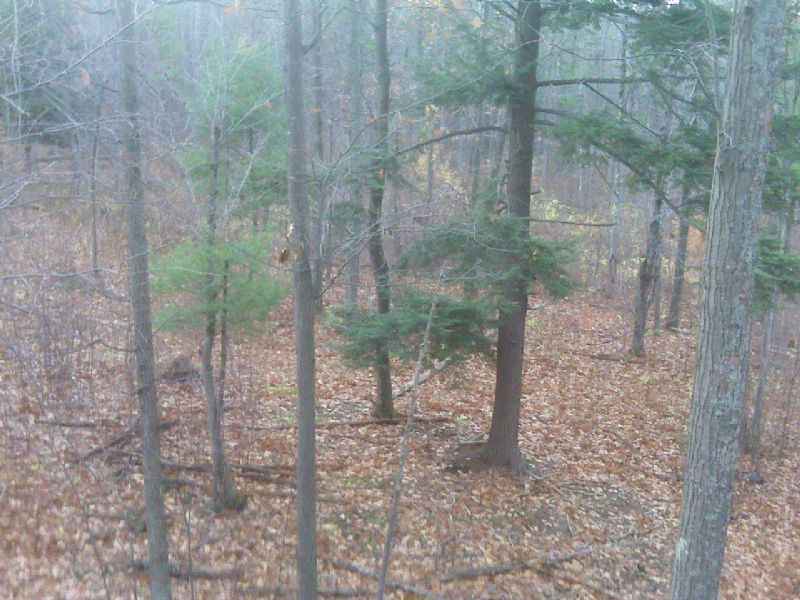 20+ Acres Bordering State Forest : Pulteney : Steuben County : New York