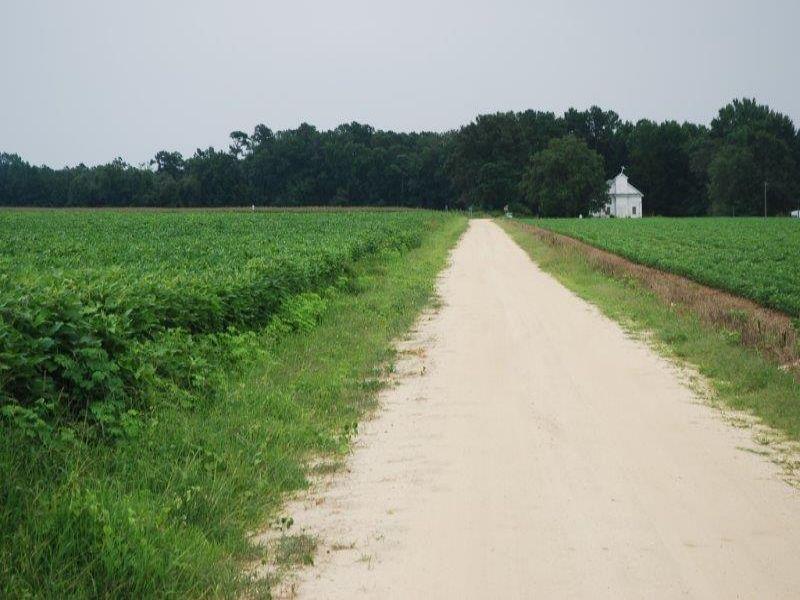 Nice Large Farm : Rowland : Robeson County : North Carolina