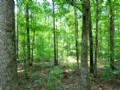 58 Acres With Beautiful Hardwoods
