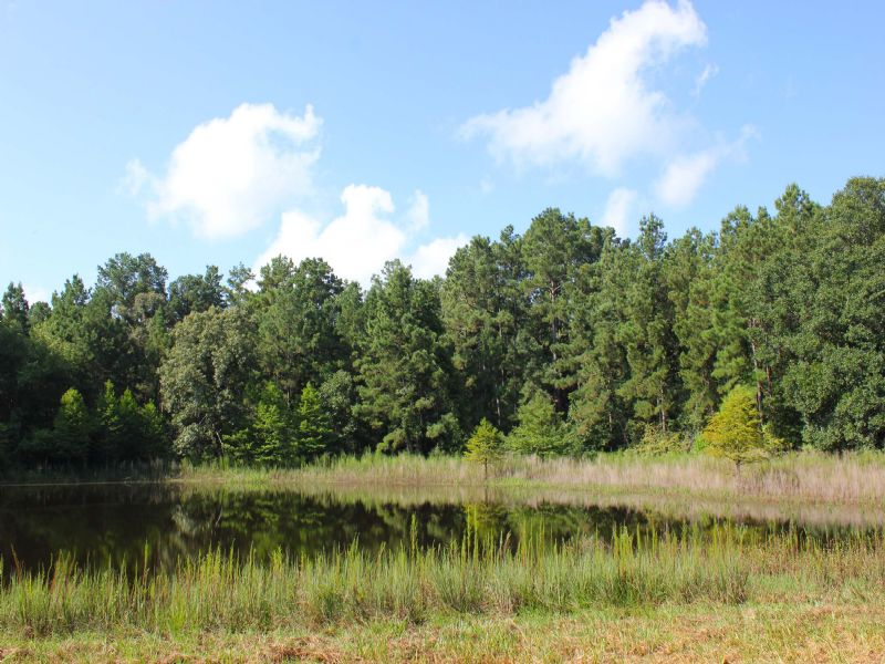 21 Ac W/Barn, Lake, Utilities : Montgomery : Montgomery County : Texas