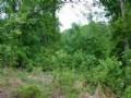Timberland With Hardwoods