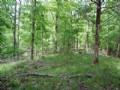 975+ Acres Of Hardwood Timber