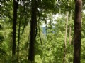 444+acres Of Timber For Sale
