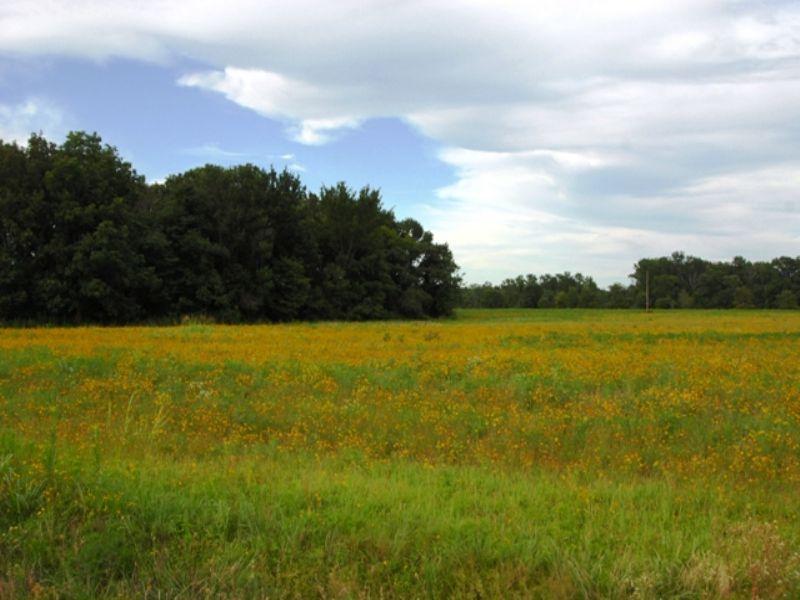 76.69 Acres Of Pasture/timber Land : Vilonia : Faulkner County : Arkansas