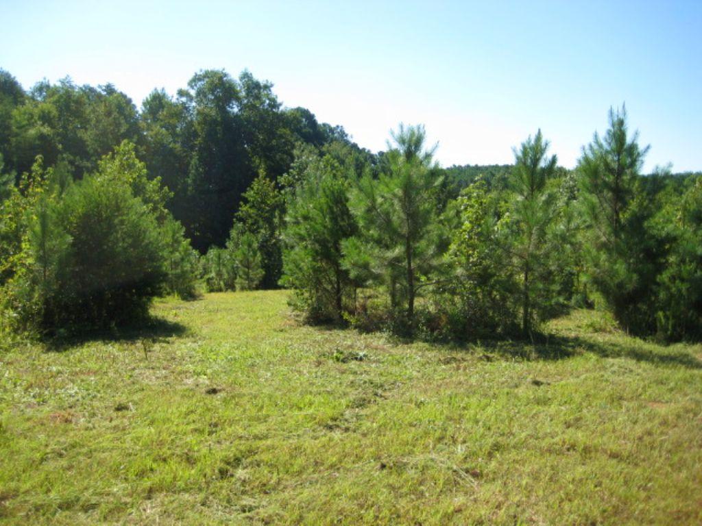 33.61 Acres Kirk Road : White : Bartow County : Georgia