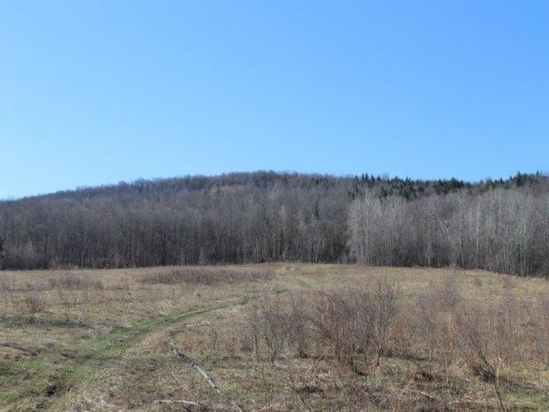 25 Acres Cabin Site - Fields/woods : Deerfield : Oneida County : New York