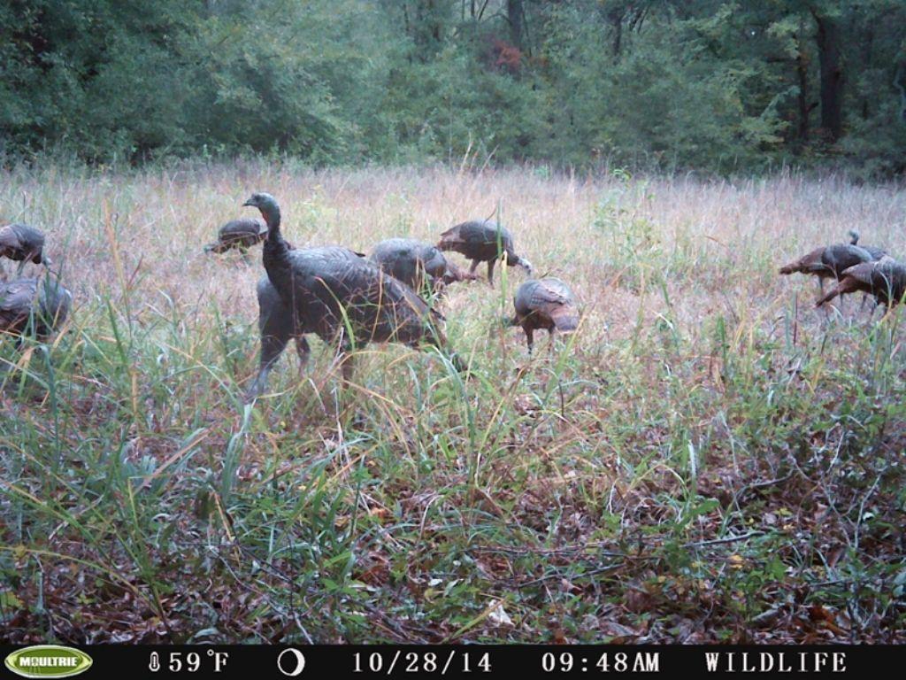 Cold Springs Creek Tract 1 : Farris : Atoka County : Oklahoma