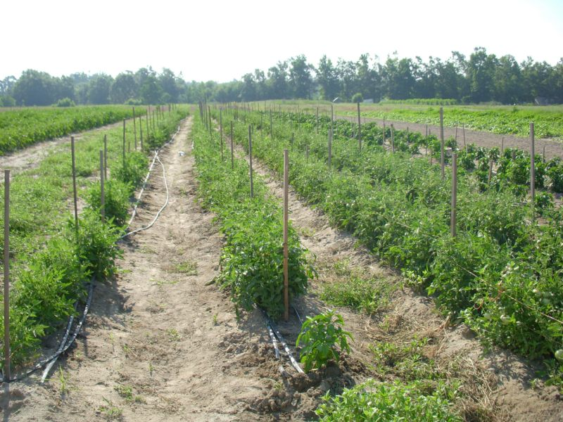 East Georgia Produce : Bartow : Jefferson County : Georgia